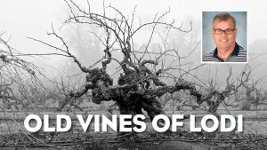 Episode #587 - Determined to Preserve the Historic Old Vines of Lodi Wine